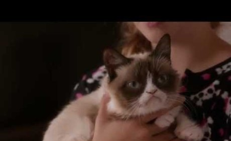 Grumpy Cat's Worst Christmas Ever Trailer