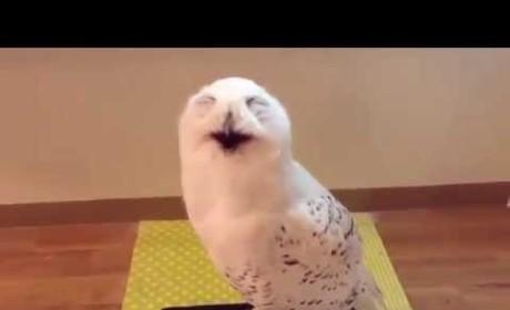 Owl Laughs at... Something