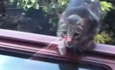 Cat Jumps Into Glass Window