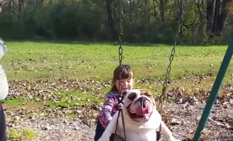 Little Girl Pushes Bulldog in a Swing, Aims to Break Internet with Cuteness