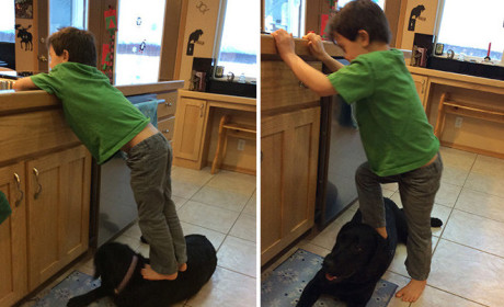 Sarah Palin on Pet Stepping Controversy: Well... Obama EATS Dogs!
