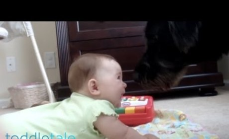 Dog Barks. Baby Laughs. Internet Melts.