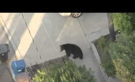 Man in California Nearly Walks Into Bear While Texting