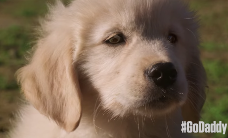 GoDaddy Super Bowl Commercial Sparks Outrage: Find Out Why
