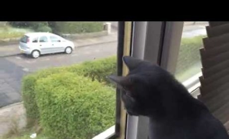 Cat Sees First-Ever Snowfall