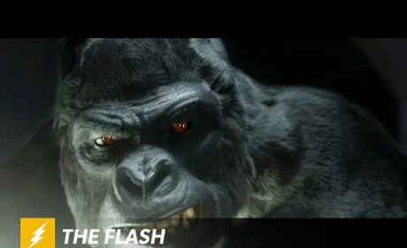 The Flash Season 1 Teaser: Is That a Psychic Gorilla?!?