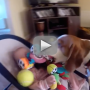 Guilty-dog-makes-amends-with-baby