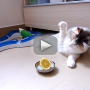 Cat Does Battle with Lemon, Wonders: What is This Thing?!?