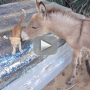 Donkey Befriends Kitten in Adorably Surprising Video: Watch Now!