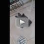 Turtle Twerks in Bathtub, Adorably Goes Viral
