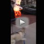 Giant Ghost Scares Heck Out of Strolling Husky: Watch, Laugh Now!