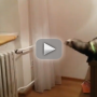 Ferret Attempts to Jump from Table to Ironing Board, Fails Miserably