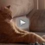 Transfixed Cat Watches Slayer in Concert, Sort of Rocks Out