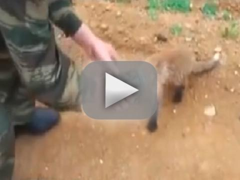 Fox Gets Head Stuck in Jar, Asks Humans For Help