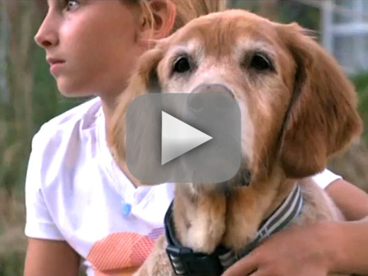 Family Reunites With Missing Golden Retriever Video
