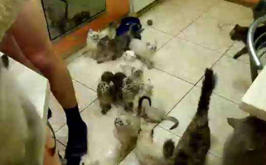 INSANE Cats