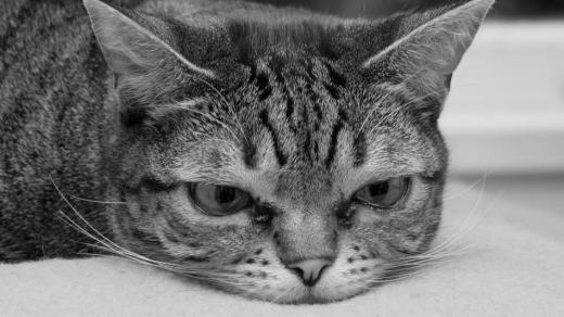 Cat Photo!