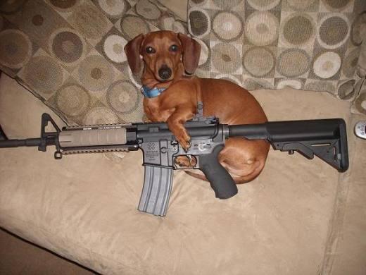 Dog, Gun