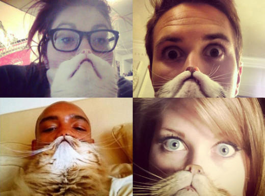 Cat Bearding: Apparently a Thing!