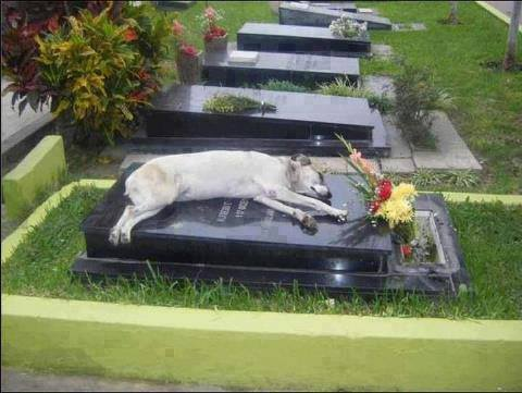 Dog on Casket