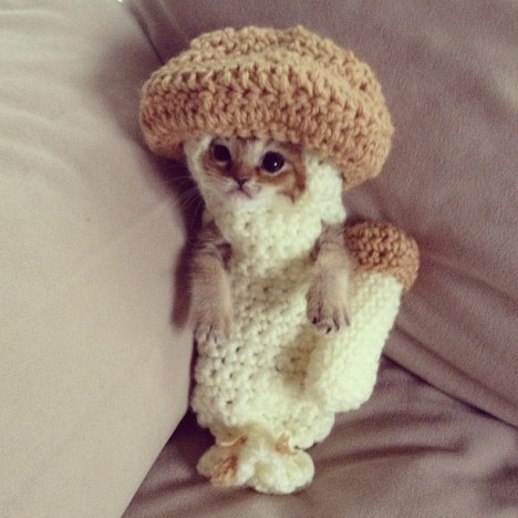 Kitten in Costume