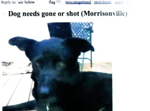 Dog Craig's List Ad